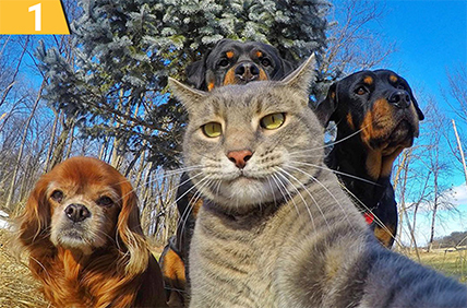 котка и кучета