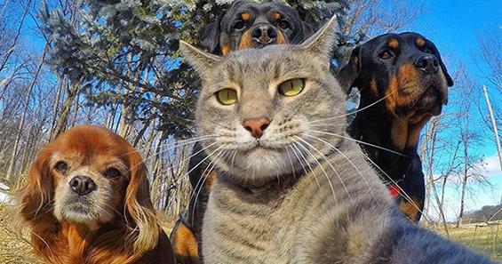 котка и кучата