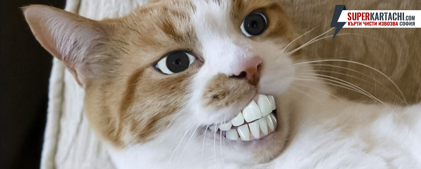 усмихната котка