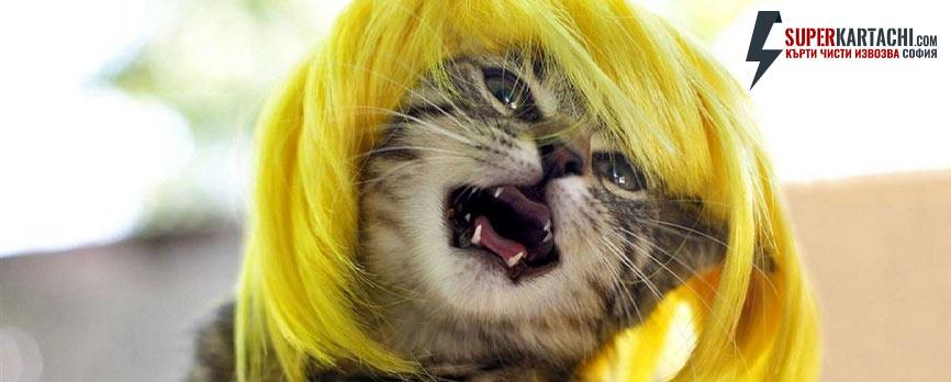 забавна котка